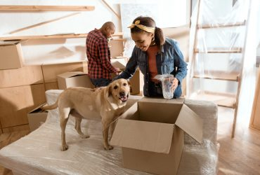 4 Important Tips for Moving With Pets